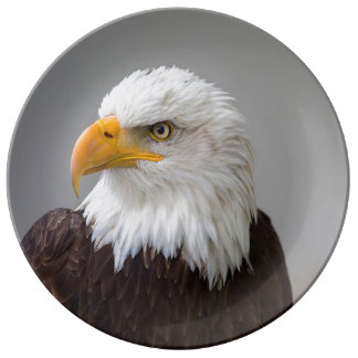 Decorative Porcelain Plate/American Bald Eagle Porcelain Plate