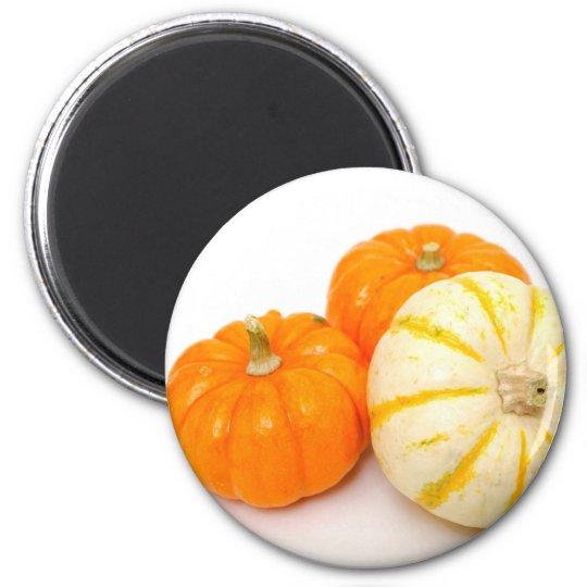 Decorative Pumpkins Magnet