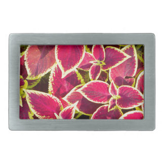 Decorative red and yellow coleus belt buckle
