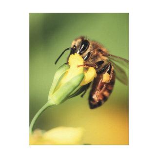 Decorative Spring Honey Bee Pollinates Flower Canvas Print