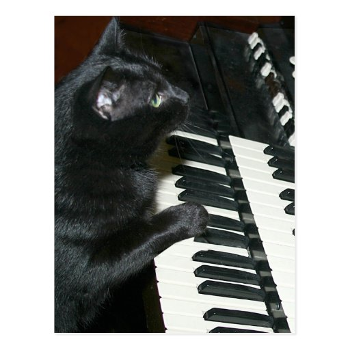 Decreto del órgano del gato postal