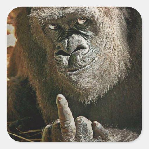 Dedo del gorila pegatina cuadrada
