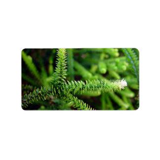 Dedos frondosos verdes y blancos etiquetas de dirección