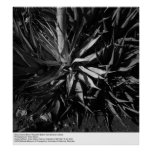 Deep Canyon Desert Research Station by Ansel Adams Poster