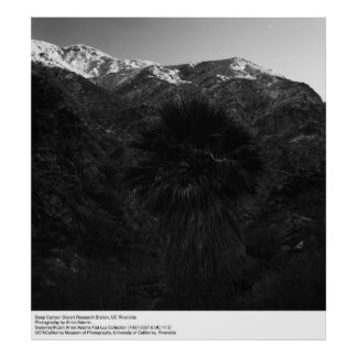 Deep Canyon Research Station, UCR by Ansel Adams Poster