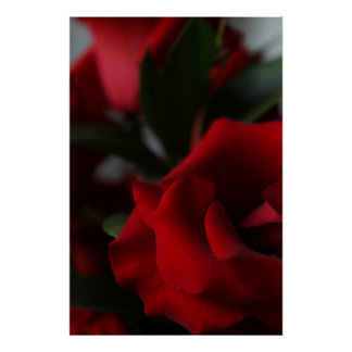 Deep, Dark Red Roses Poster
