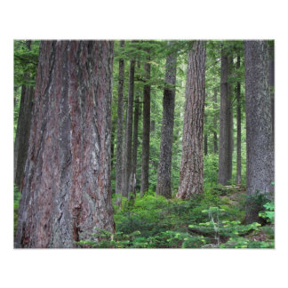 Deep Forest Photo Print