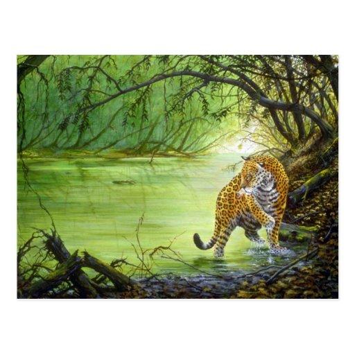 Deep in the woods, Jaguar Postcard