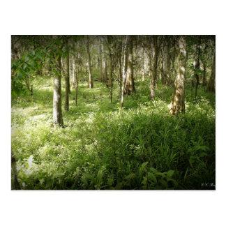 Deep in the Woods Postcard
