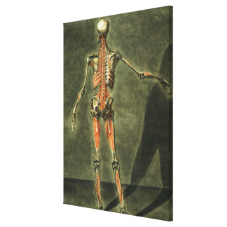 Deep Muscular System of the Back of the Body, plat Stretched Canvas Print