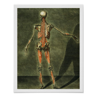 Deep Muscular System of the Back of the Body, plat Print
