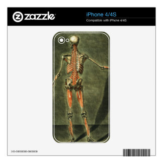 Deep Muscular System of the Back of the Body, plat Skins For iPhone 4