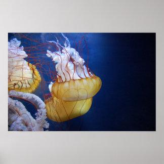 Deep Ocean Jelly Fish Poster