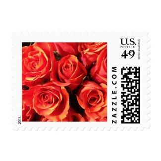 Deep Orange Roses Postage