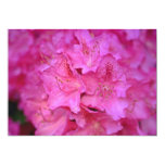 Deep Pink Azalea Cluster flowers Announcements