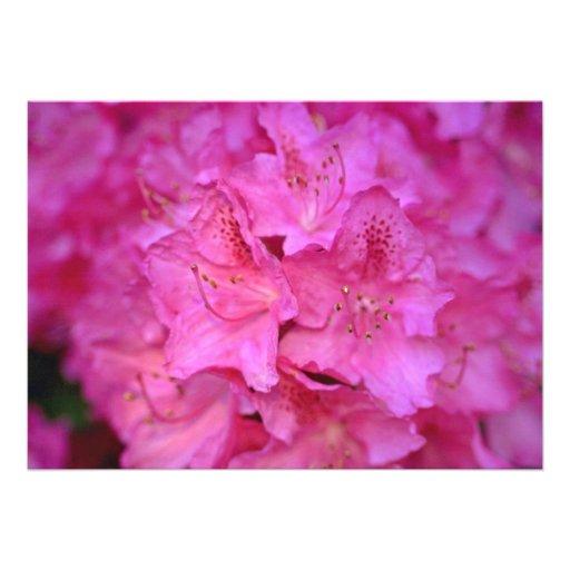 Deep Pink Azalea Cluster flowers Announcements