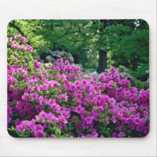Deep Pink Azalea flowers Mousepads