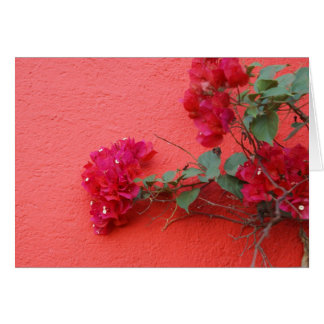 Deep Pink Bougainvillea Pink Wall Card
