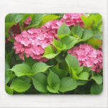 Deep Pink Hydrangeas Mouse Pad