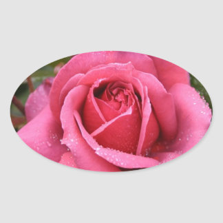 Deep Pink Morning Rose Oval Sticker