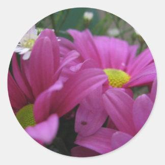 deep pink mums classic round sticker
