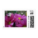 deep pink mums postage stamp