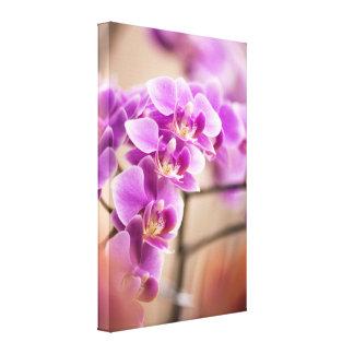 Deep Pink Phalaenopsis Orchid Flower Chain Canvas Print