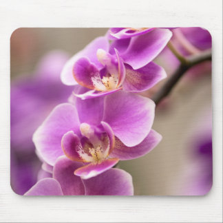 Deep Pink Phalaenopsis Orchid Flower Chain Mouse Pad