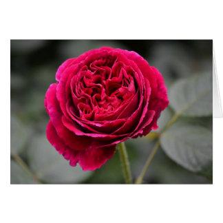 Deep Pink Rose Card