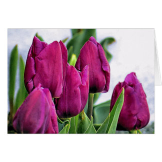 Deep Pink Tulips Card