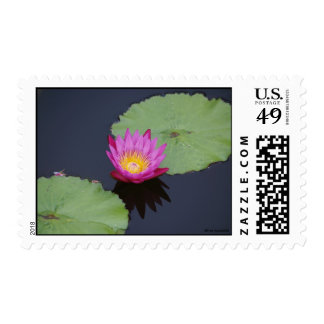 Deep Pink Water Lily Postage