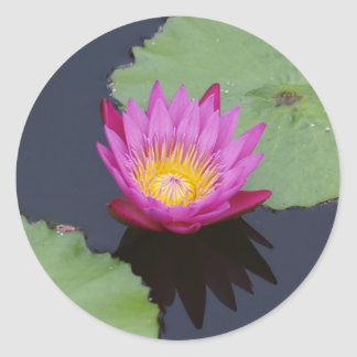 Deep Pink Water Lily Sticker