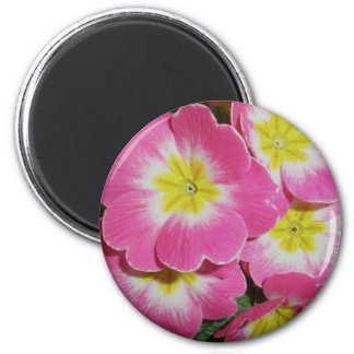 Deep Pink Yellow Primrose Magnet