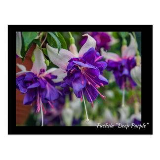 """Deep Purple fucsia "" Postales"