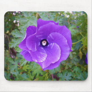 Deep Purple Hibiscus Flower, Mouse Pad