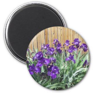 Deep Purple Irises Magnet