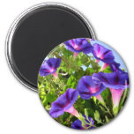 Deep Purple Morning Glory Climbing Plant 2 Inch Round Magnet