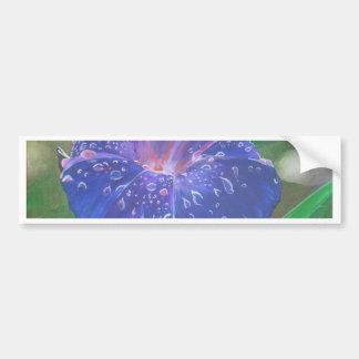 Deep Purple Morning Glory With Morning Dew Bumper Sticker