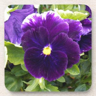Deep Purple Pansies On Bush, Coaster
