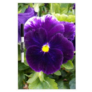 Deep Purple Pansies On Bush, Dry-Erase Board