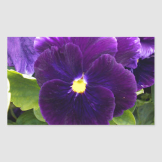 Deep_Purple_Pansy,_ Rectangular Sticker
