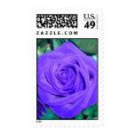 Deep Purple Rose Postage