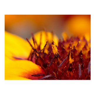 Deep red and intense yellow flower postcard