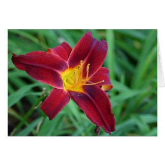 Deep red day lilly card