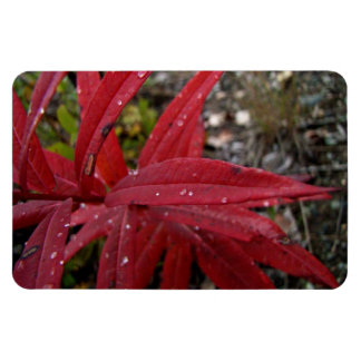 Deep Red Leaves; No Text Magnet