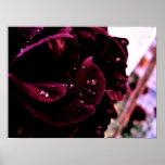 deep red rose print