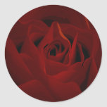 Deep Red Rose Sticker