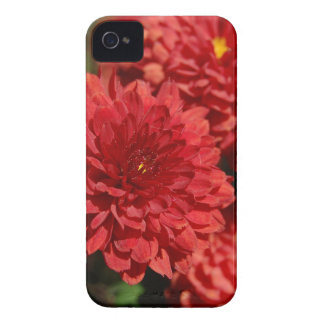 Deep Red Serenity Case-Mate iPhone 4 Cases