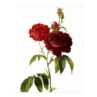 Deep red vintage roses painting postcard