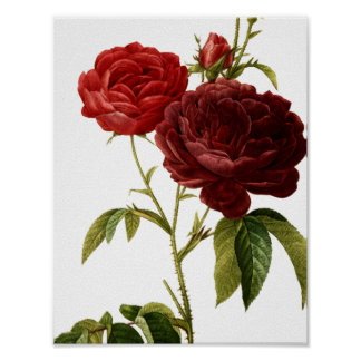 Deep red vintage roses painting poster